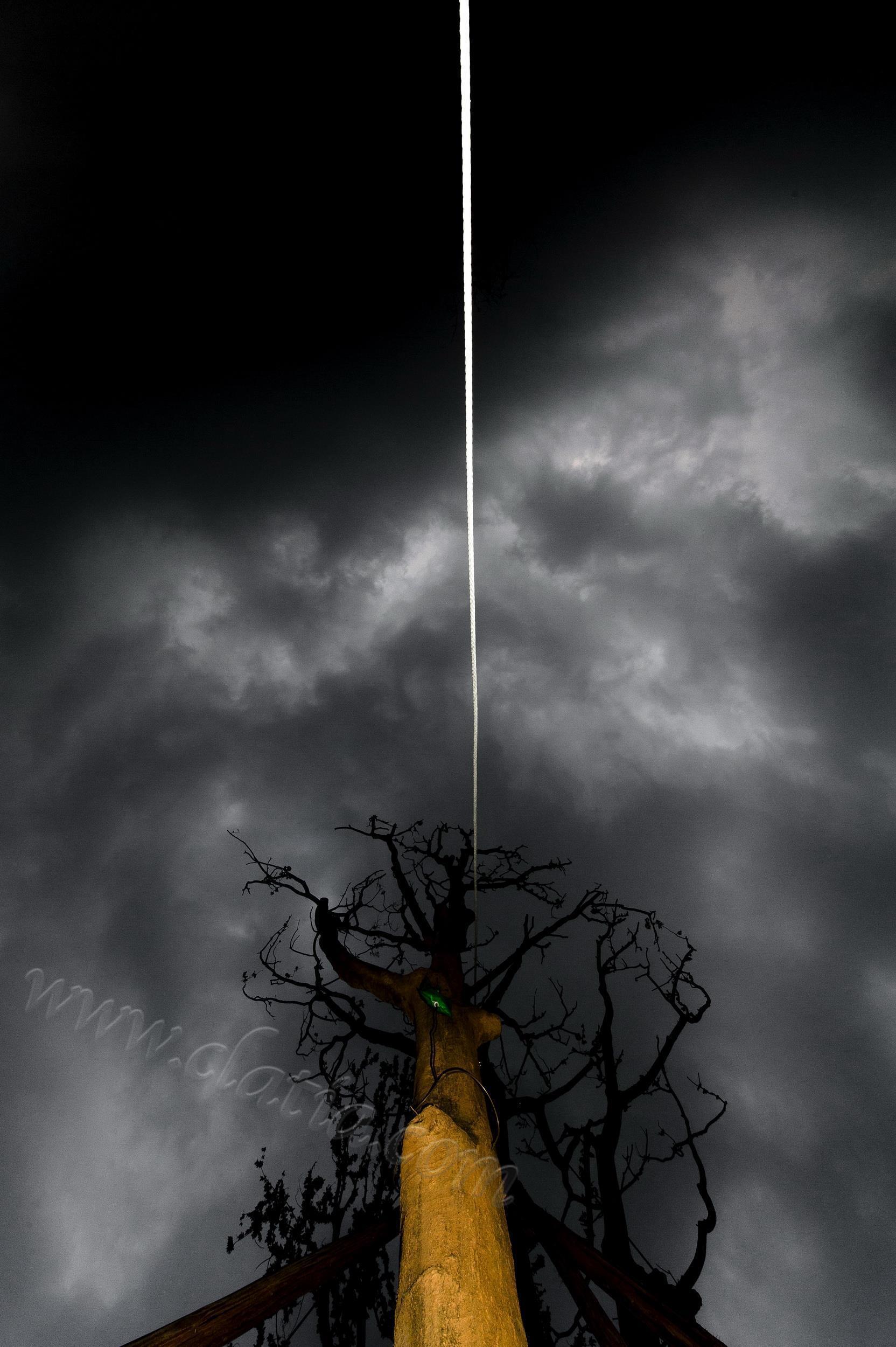 当代艺树-1