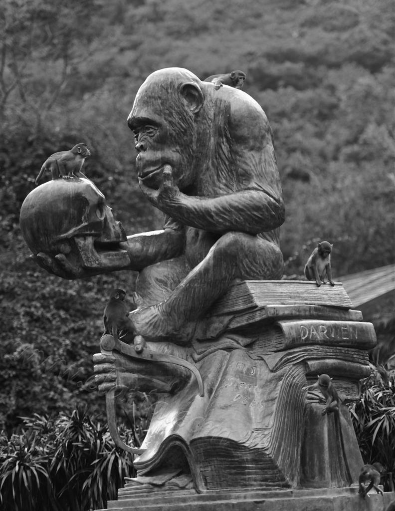 达尔文的对话:猴与猿与人