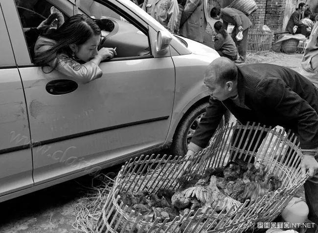 卖鸡的农民为小车让道 2008年李渡镇