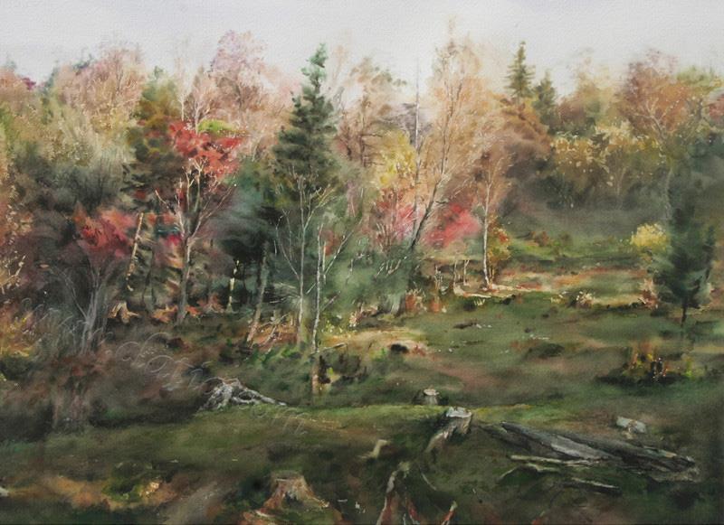 逝去的森林
