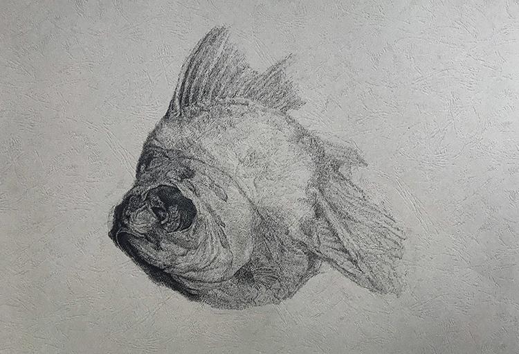 风化系列之:鱼-中性笔·皮纹纸