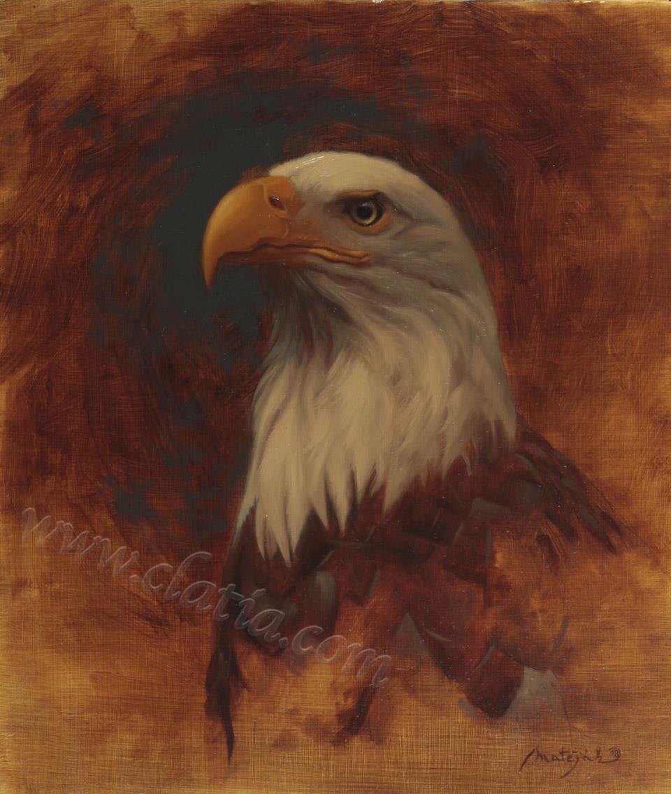 Eagle 30 x 35 cm Oil on ACM