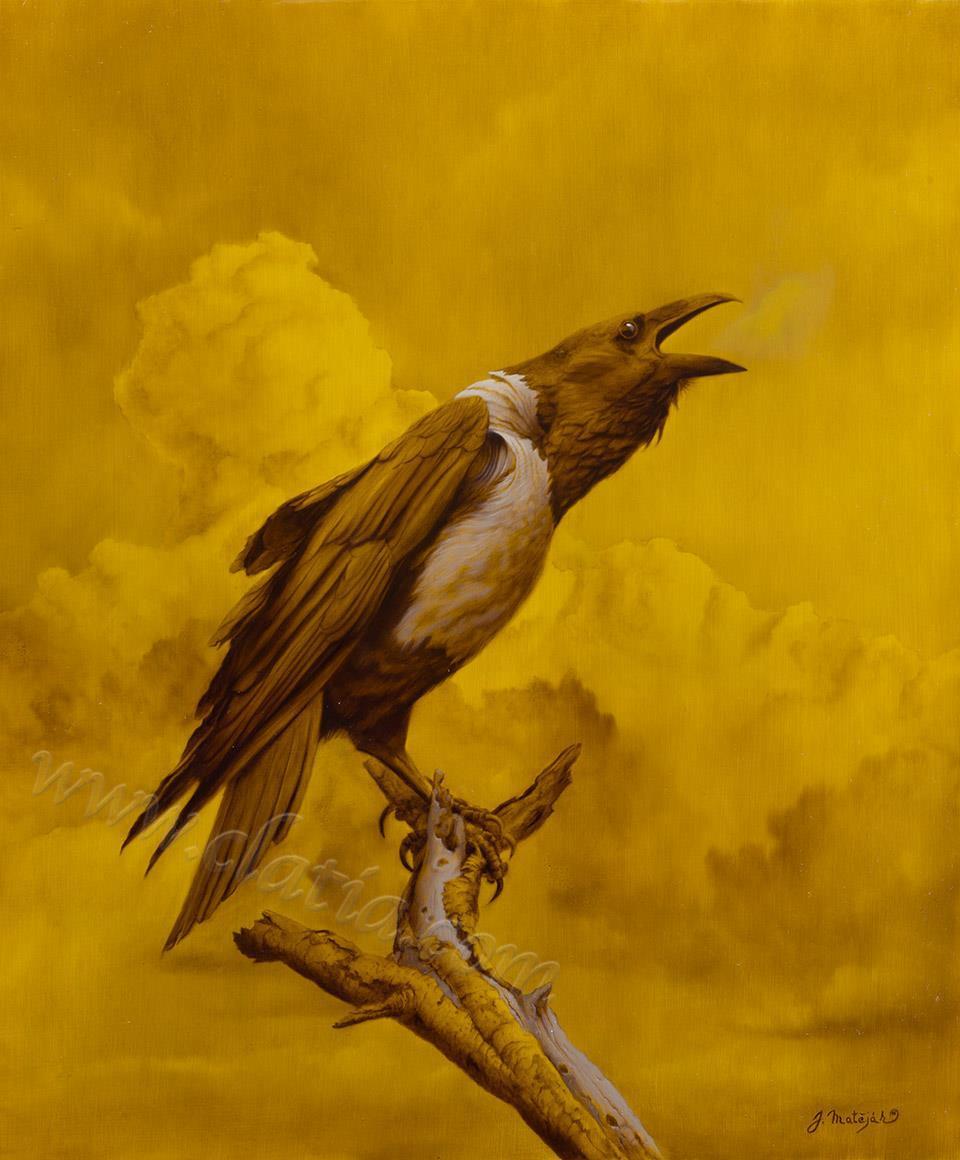 Crow 50 x 60 cm Oil on ACM
