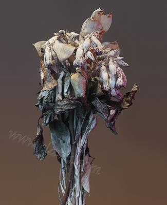 Decaying bouquet  I