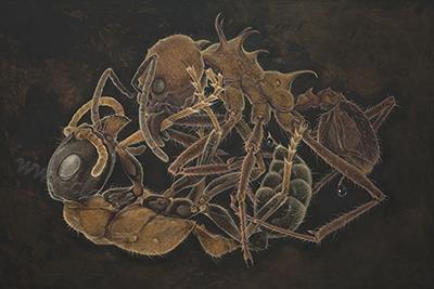 Ants80x120cm